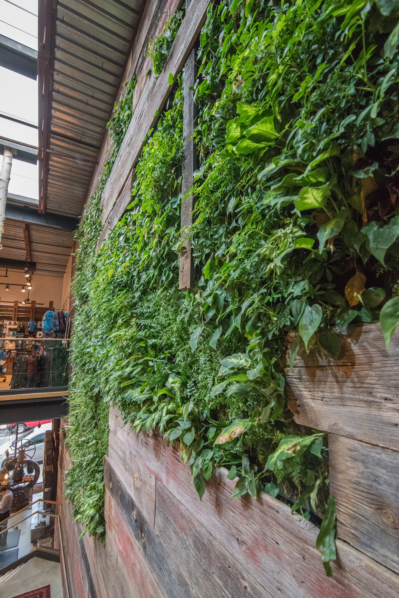 Live wall featuring plants at Denali in Providence, Rhode Island, with red board sourced by Rousseau Reclaimed Lumber & Flooring